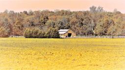 0200.3 - orange horse house