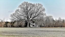 3037.2 - tree house