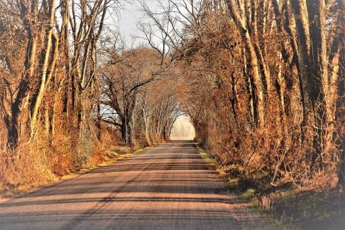 TTW360Z11.2 winter arch2