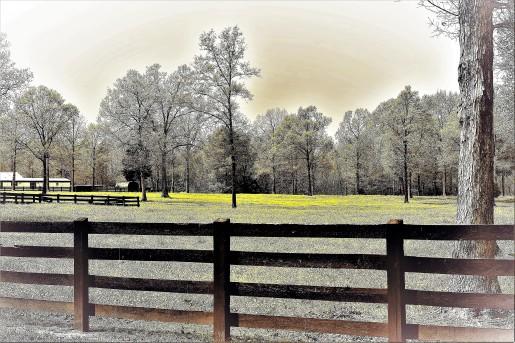 TTW7322.2 fenced in yellow