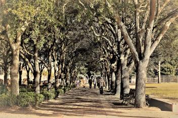 Battery Park Charleston