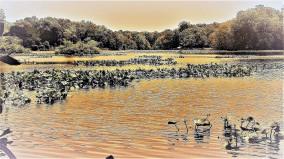 OTR2013.2 lilly pond